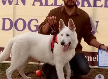Very Rare Microchip Pedigreed White German Shepherd  (Beauty Contest Winner in Puppy Category)