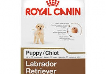 Labrador Retriever Puppy Dog Food