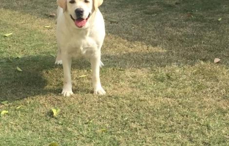 Buy Dog In Lahore