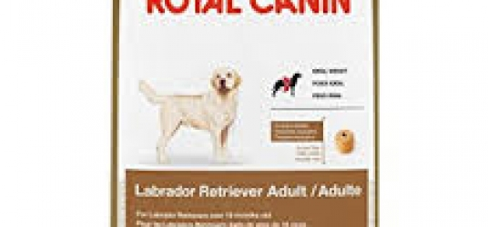 Labrador Retriever Adult Dog Food