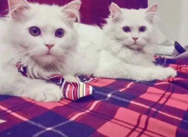 Cute & Palyful
