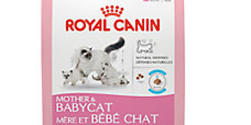 cat-food-2-1.jpeg