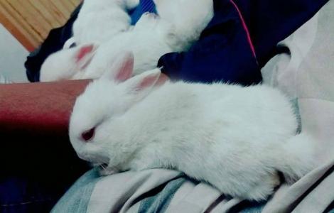 5 bunnies red eyes