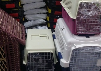 Cats & Dogs Jet Boxes