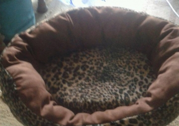 Beds for Cats & Puppy